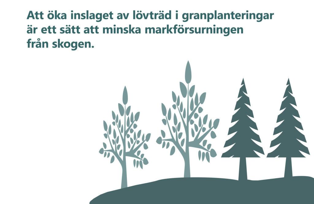 """Bilden visar texten """"Att öka inslaget av lövträd i granplanteringar är ett sätt att minska markförsurningen från skogen."""""""