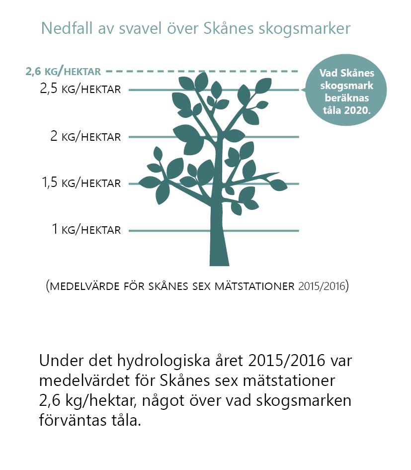 Nedfall av svavel över Skånes skogsmarker. (Medelvärde för Skånes mätstationer 2015/2016.) Illustration av ett lövträd med en skala i kg/hektar bakom. Trädet når upp till mätvärdet 2,6 kg/hektar. En linje visar att Skånes skogsmark beräknas tåla 2,5 kg/hektar år 2020.Text under: Under det hydrologiska året 2015/2016 var medelvärdet för Skånes sex mätstationer 2,6 kg/hektar, något över vad skogsmarken förväntas tåla.