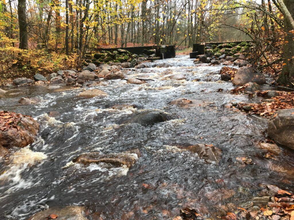 Foto vid en damm i Hunserödsbäcken efter restaureringsåtgärder. Dammen har öppnats upp och nu kan vattnet flöda fritt och fisken kan vandra fritt i denna sträcka av vattendraget.