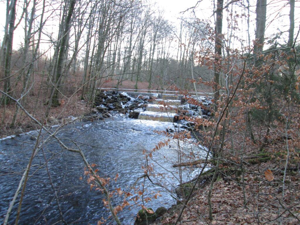 Foto vid en damm i Hunserödsbäcken innan restaureringsåtgärder. Dammen utgjorde ett svårpasserat hinder för fisk.