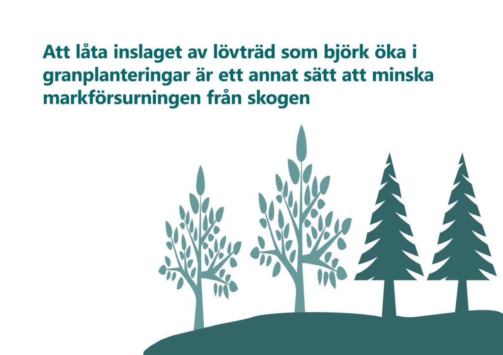 Text: Att låta inslaget av lövträd som björk öka i granplanteringar är ett annat sätt att minska markförsurningen från skogen. Illustration: stiliserade lövträd och granar. Illustration: stiliserade lövträd och barrträd.