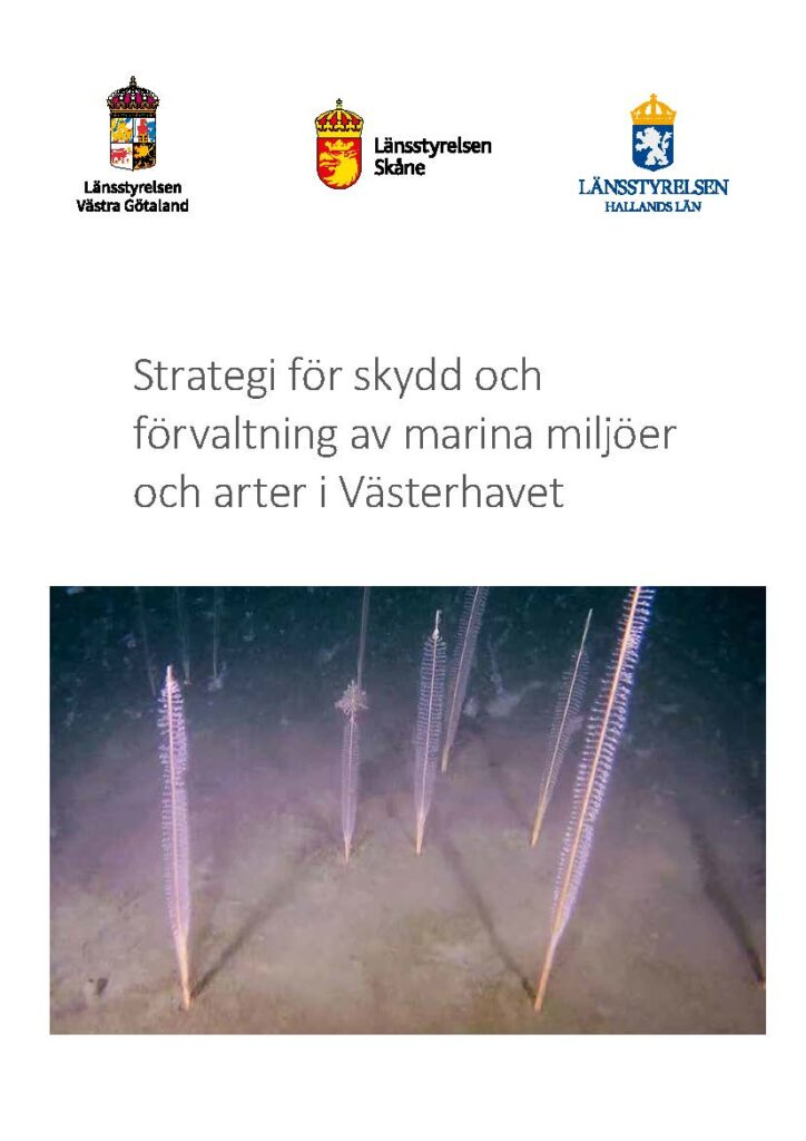 Framsida av rapporten Strategi för skydd och förvaltning av marina miljöer och arter i Västerhavet. Klicka på bilden för att komma till rapporten.