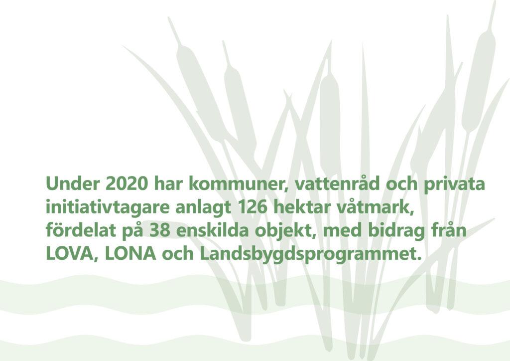 """Bilden visar texten """"Under 2020 har kommuner, vattenråd och privata initiativtagare anöagt 126 hektar våtmark, fördelat på 38 enskilda objekt, med bidrag från LOVA, LONA och Landsbygdsprogrammet."""""""