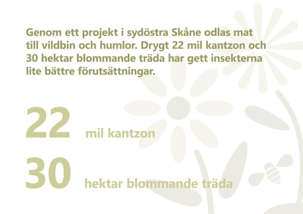 Text: Genom ett projekt i sydöstra Skåne odlas mat till vildbin och humlor. Drygt 22 mil kantzon och 30 hektar blommande träda har gett insekterna lite bättre förutsättningar. Illustration: Stiliserade blommor och en humla.