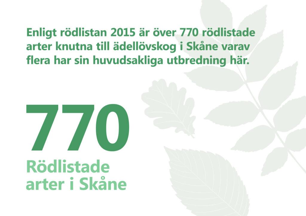 rödlistan 2015 är över 770 rödlistade arter knutna till ädellövskog i Skåne varav flera har sin huvudsakliga utbredning här. Illustration: stiliserade blad av olika lövträd.