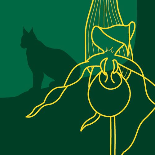 Illustration av miljömålet Ett rikt växt- och djurliv. Ett lodjur i bakgrunden och en växt i förgrunden. Illustration av Tobias Flygar.