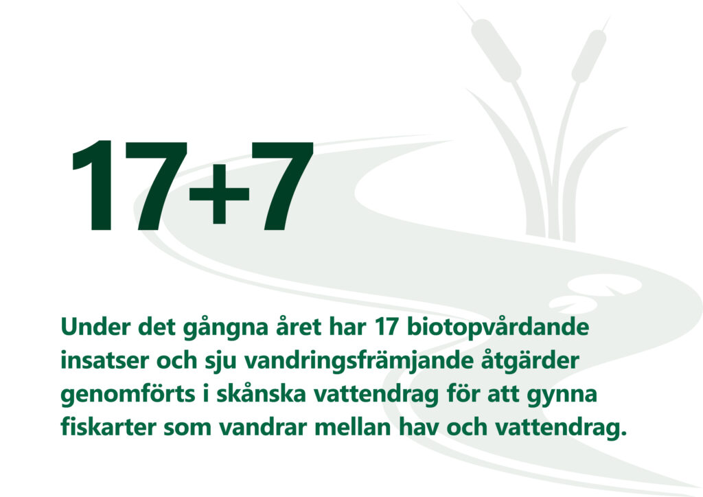 """Bilden visar texten: Under det gångna året har 17 biotopvårdande insatser och 7 vandringsfrämjande åtgärder genomförts i skånska vattendrag för att gynna fiskarter som vandrar mellan hav och vattendrag""""."""
