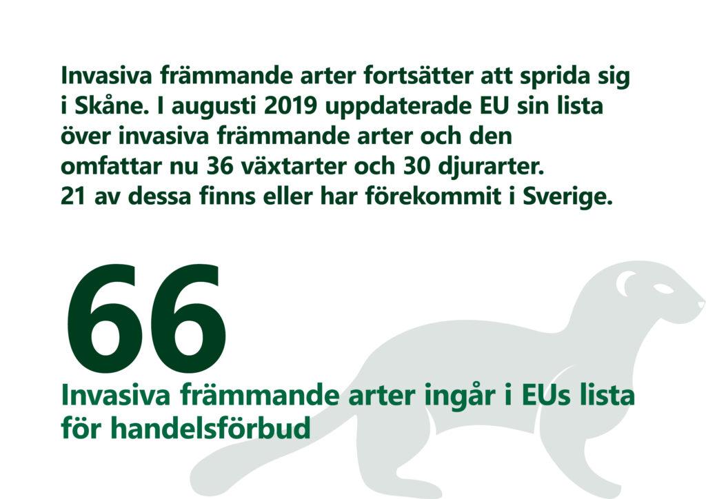 Invasiva främmande arter (IAS) fortsätter att sprida sig i Skåne. Det finns just nu 66 arter på EU-förteckningen över invasiva främmande arter, vilka inte får introduceras i landet, spridas i naturen eller gynnas att bli fler. Det är också förbjudet att sälja, byta och importera dessa arter. Tjugo av de EU-listade arterna finns eller har förekommit i Sverige.