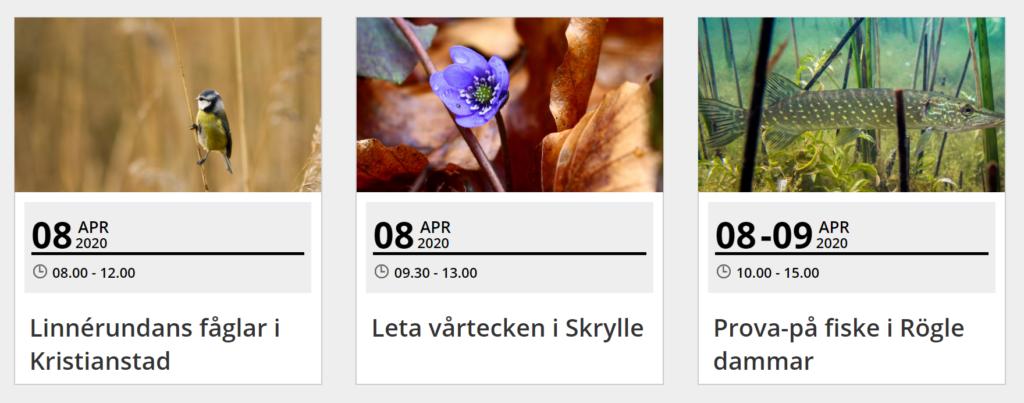 Skärmklipp av och länk till kalender för naturguidningar. Fotona visar en fågel, en blomma och en fisk. Texten visar datum, tider och kort info om arrangemangen.