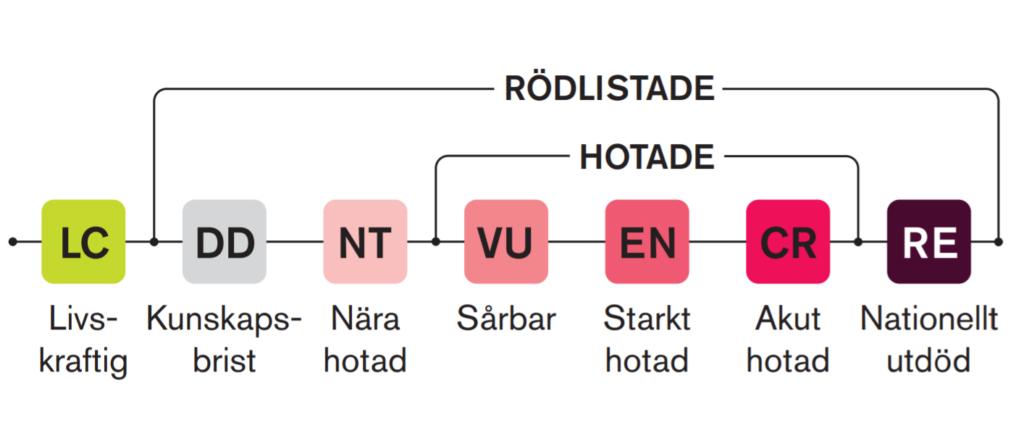 Illustration av rödlistningskategorierna och deras förkortningar. RE= Nationellt utdöd. CR=Akut hotad. EN=Starkt hotad. VU=Sårbar. NT=Nära hotad. DD=Kunskapsbrist. LC=Livskraftig. CR, EN och VU kallas tillsammans Hotade. RE, CR, EN, VU, NT och DD kallas tillsammans Rödlistade.