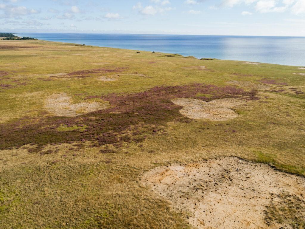 Under åren 2012-2018 har 700 hektar öppnats upp genom röjningar, avverkning och stubbrytning samtidigt som den viktigaste strukturen blottlagd sand har ökat med 240 hektar. Foto: Maria Sandell.