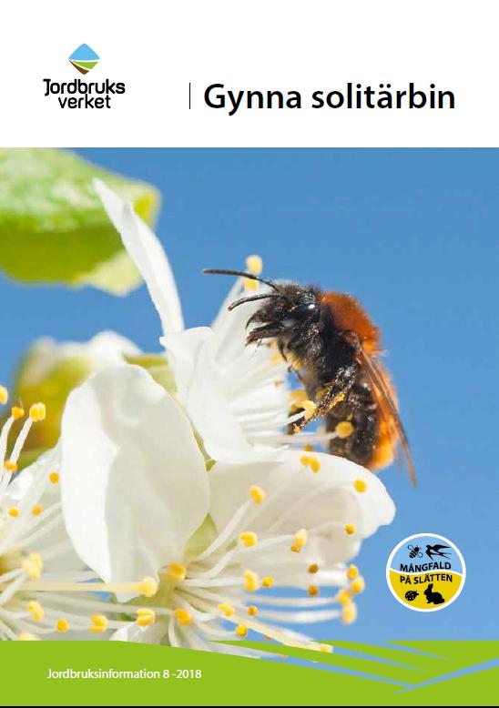 Bild av framsidan på Jordbruksverkets broschyr om att gynna solitärbin. Jordbruksinformation 8-2018. Klicka på bilden för att komma till rapporten .